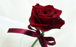 1386071709-1-single rose