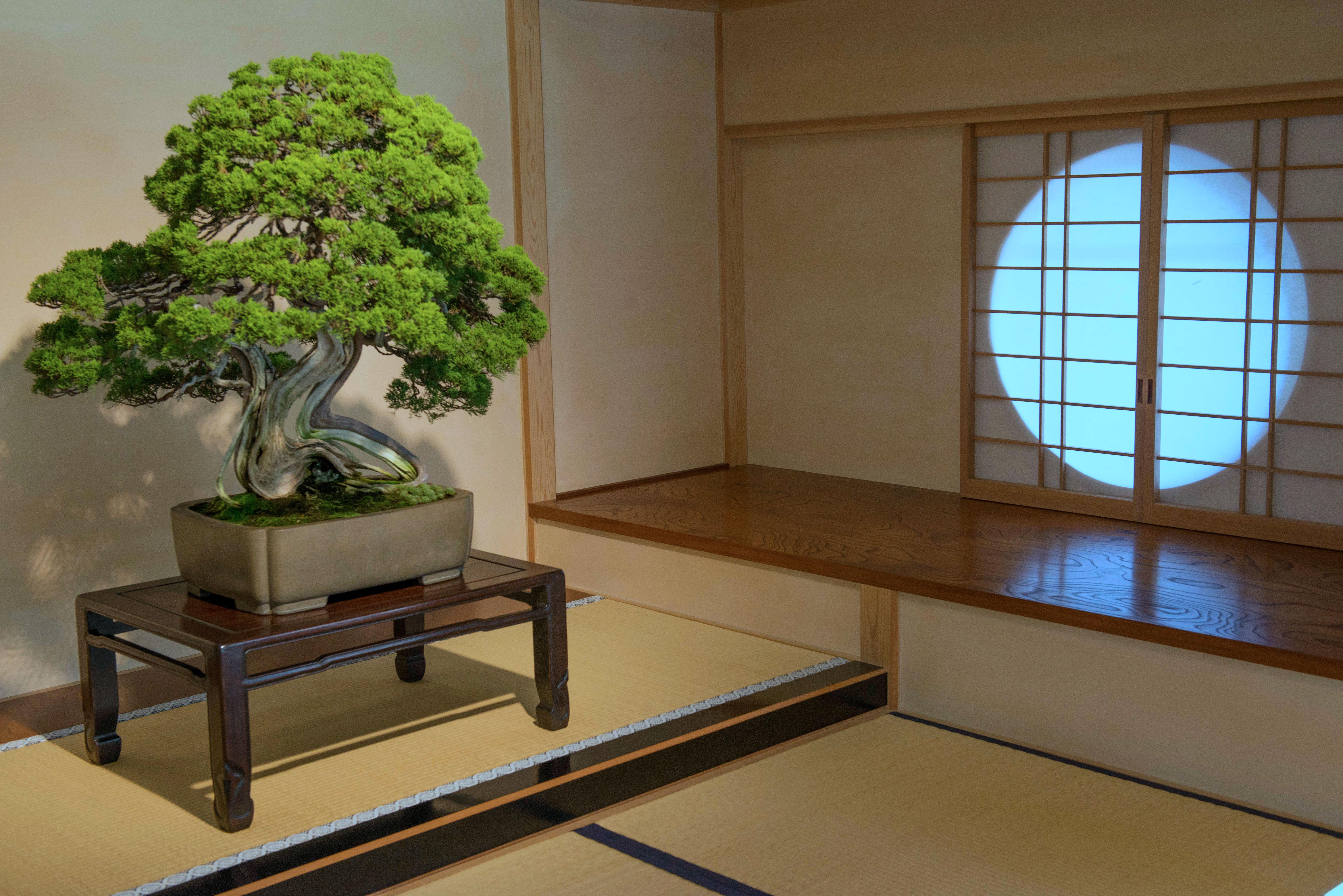 p16-mansfield-bonsai-c-201411021