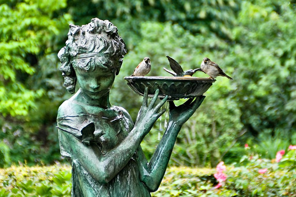 Prepare Garden for Birds