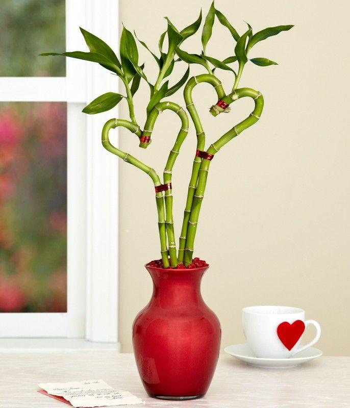 heart-shaped-bamboo