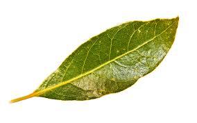 bay leaf for skin