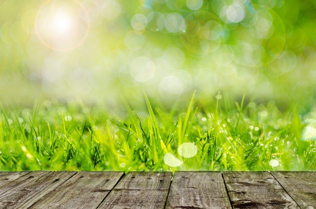 fress grass is good for eyesight
