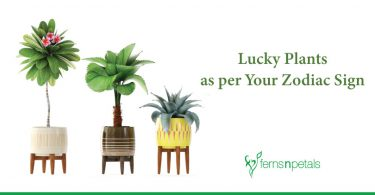 Know the Lucky Plants as per Your Zodiac Sign