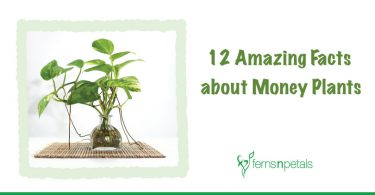 12 Amazing Facts to Learn About Money Plants