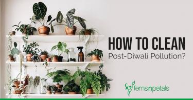Beat Post Diwali Pollution