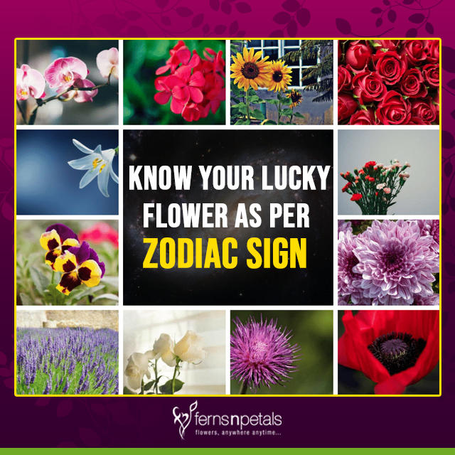 Can Flowers Bring Some Good Luck Your Way? Know Your Good