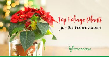 The Best Foliage Plants To Gift This Festive Season