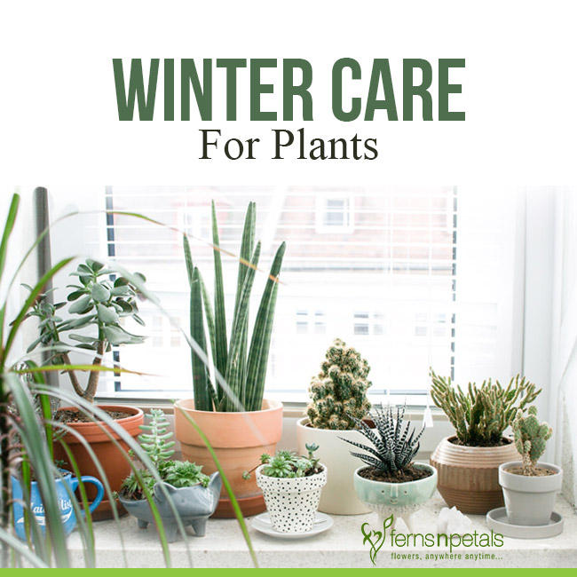 How To Take Care Of Plants In Winter? Guide To Winter Care