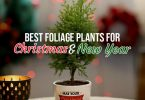 Foliage Plants To Gift