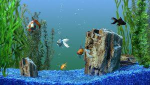 Aquarium water as Plant Fertilizer