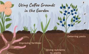 Coffee As Plant Fertilizer