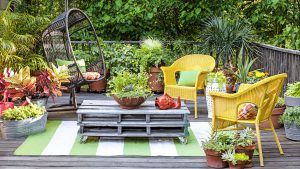 Use of Space in Terrace Gardening