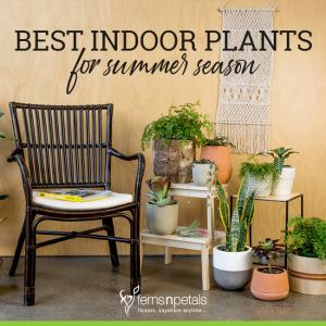 Best Indoor Plants for Summer Season
