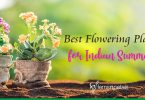 Best Flowering Plants for Indian Summer