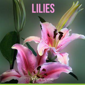 Top 30 Summer Flowering Plants Ferns N Petals