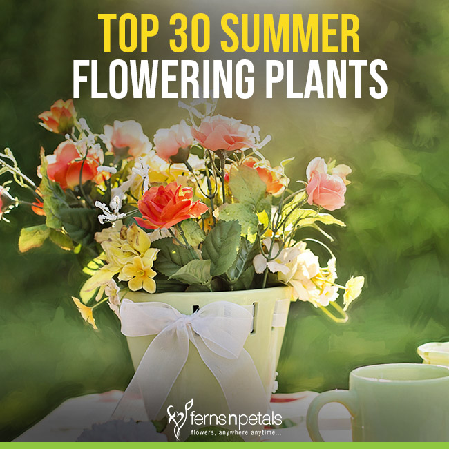 Top 30 Summer Flowering Plants Ferns N Petals