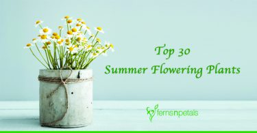 Top 30 Summer Flowering Plants