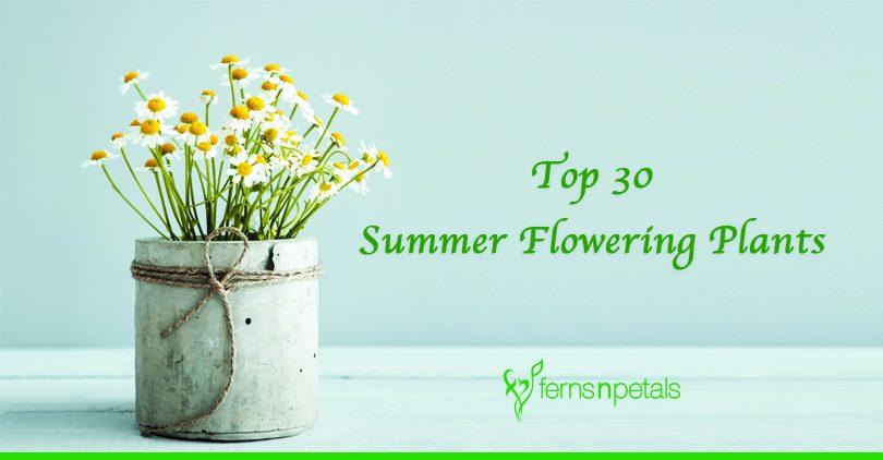 Top 30 Summer Flowering Plants