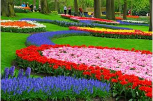 Canberra Flower Festival