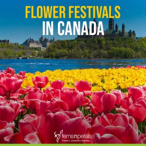 Flower Festivals in Canada