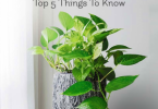 5 Things To Know About Money Plants