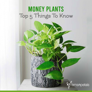 Top 5 Things To Know About Money Plants