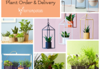 How To Order & Get Delivery of Plants From Ferns N Petals?