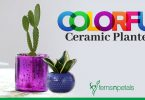 Colorful Ceramic Planters