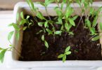 DIY- 3 Easy to Grow Herbs