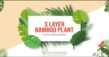 Importance of 3 Layer Lucky Bamboo Plants