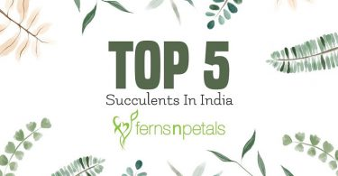 Top 5 Succulent Plants suitable for Indian Climate
