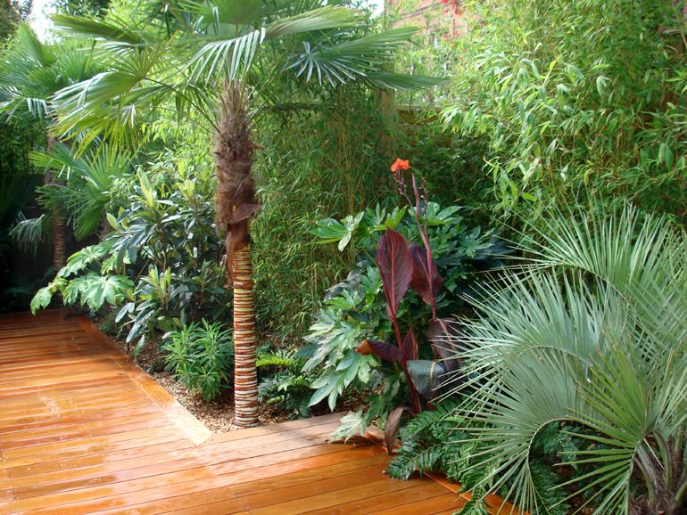 Big tropical Plants