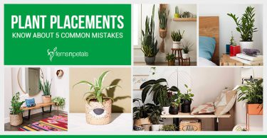 5 Common Mistakes That Everyone Do While Placing Plants
