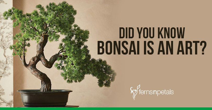 Bonsai is an Art