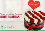 Flowers That Can Express Romantic Emotions