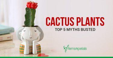 Cactus Myths