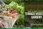 Grow Vegetables on Terrace