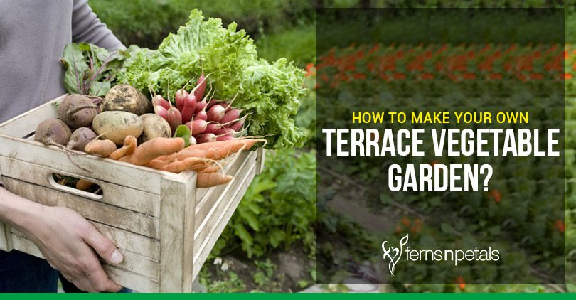 How To Make Your Own Terrace Vegetable Garden Ferns N Petals