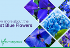 rarest blue flowers