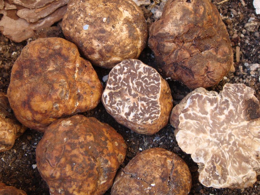 whitish truffle