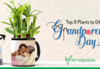 plant for grandparents day