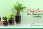 Newly Launched Terrariums