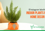 Instagram Worthy Indoor Plants for Home Decor