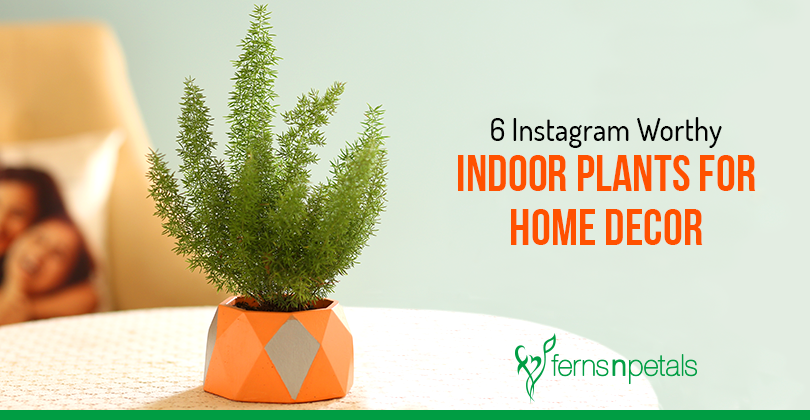 Instagram Worthy Indoor Plants for Home Decor