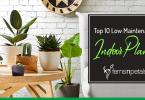 top 10 low maintenance indoor plants