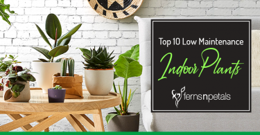 top 10 low maintenance indoor plants