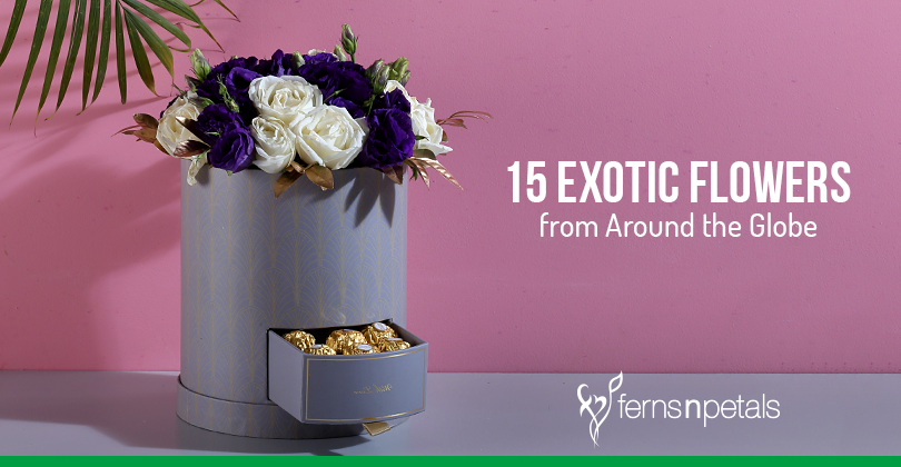 15 Exotic Flowers From Around The Globe Ferns N Petals