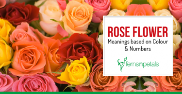 rose color and number meaning