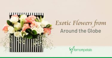 Exotic Flowers From Around the Globe