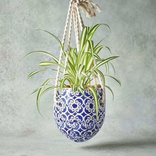 Insta Worthy Spider Plants